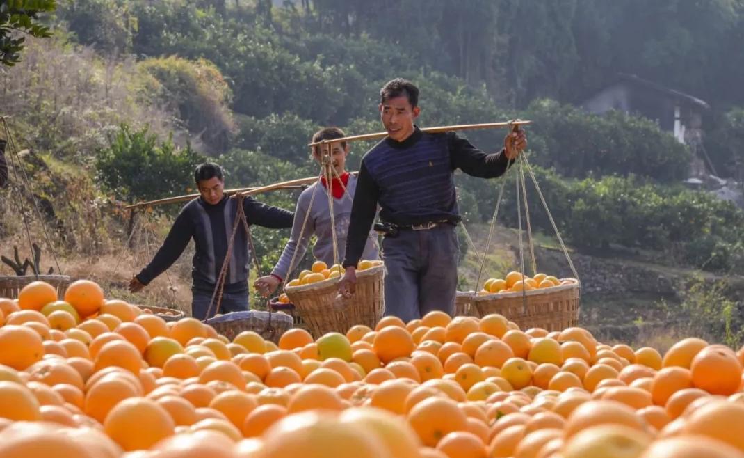 淘宝联盟、阿里巴巴数字农业联合,把贫困县的农产品卖爆了